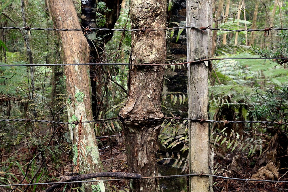 Number 8 and barbed wire on kanuka post by Tony Foster