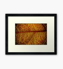 Orange and Red Framed Print