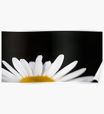 Select Daisy Poster