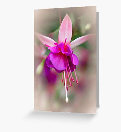 Softly Greeting Card