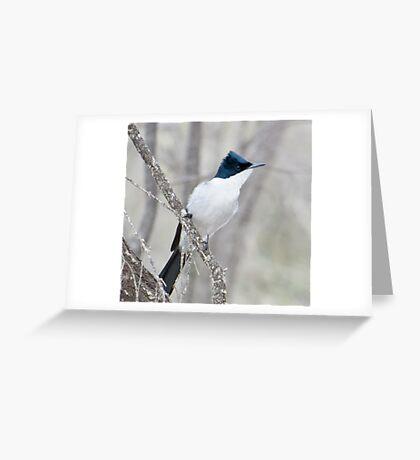 Ressless Flycatcher Greeting Card
