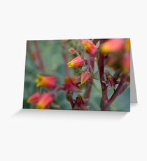 Opening flowers Greeting Card