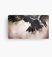 """""""Alight - The Wedge-tailed Eagle"""" Metal Print"""