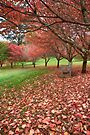 Autumn Views_Mt Wilson by Sharon Kavanagh