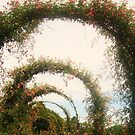 Arched  by DearMsWildOne