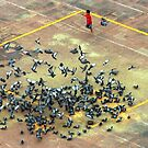 National Geographic Pigeons by andreaminerdo