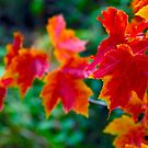 Autumn in Milan 2 by andreaminerdo