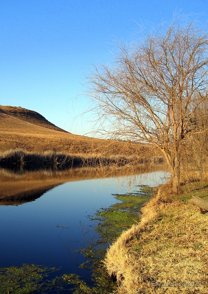 Wilgeriver, Gauteng, South Africa during winter. by Elizabeth Kendall