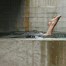 the plunge ............... by deborah brandon