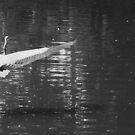 Spread Your Wings, Wide  by DearMsWildOne