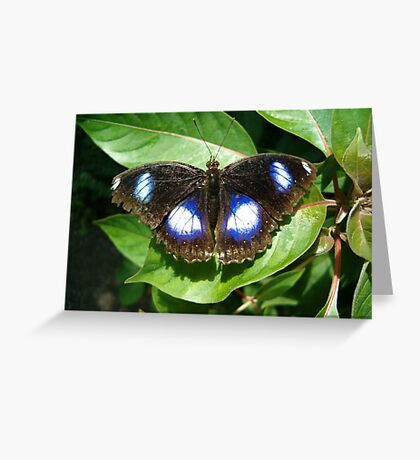 The Great Egg Fly Butterfly Greeting Card