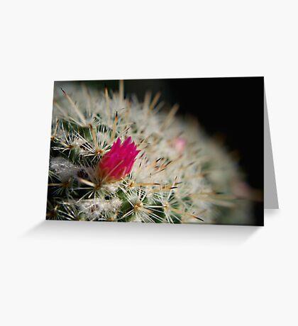Pink flowering cactus Greeting Card