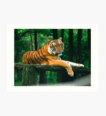 The Bengal Tiger Art Print