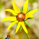 Swinging from a flower by Benjamin Sloma