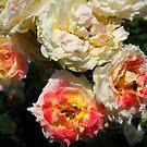 Amazing Roses # 1. by Vitta