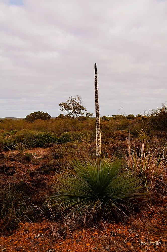 110619 Lesueur National Park Grass tree in flower by Jaxybelle