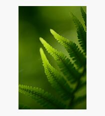 Fern Photographic Print