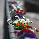 Flower Box in Austria by April-in-Texas