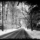 "Driveby Shooting No. 18 Wintery Drive by Christine ""Xine"" Segalas"