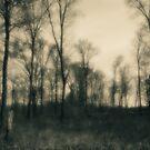 Afternoon On The Prairie by MLabuda
