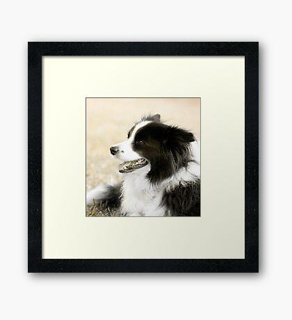 Soccer Dog - border collie Framed Print