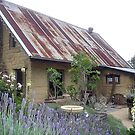 Rusty roof Lavender scent by chrisjf56
