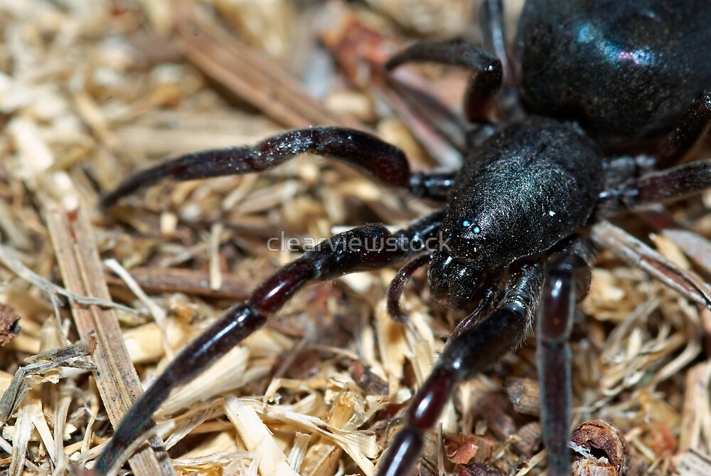 House Spider by clearviewstock