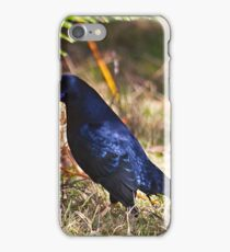 Male Satin Bower Bird iPhone Case/Skin