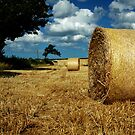Harvest Time by Paul Berry