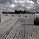 Harvest Time No.2 by Paul Berry