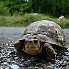 Cute Turtle~ by virginian