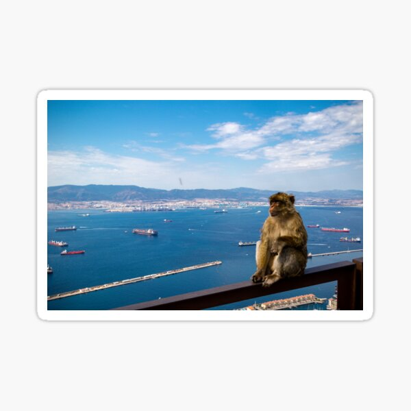 The famous apes of Gibraltar Sticker