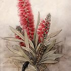 Callistemon Foresterae:  Population 3000 by Re: Rememberer