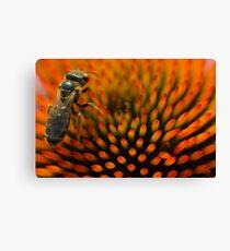 Bee on Echinacea Canvas Print