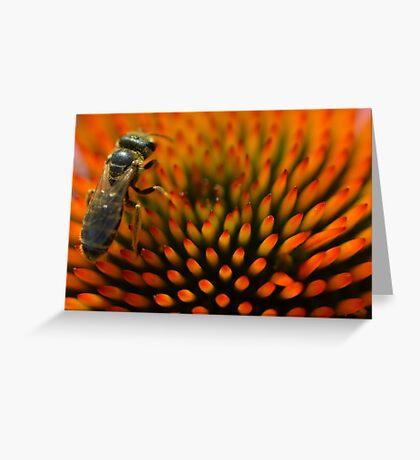 Bee on Echinacea Greeting Card