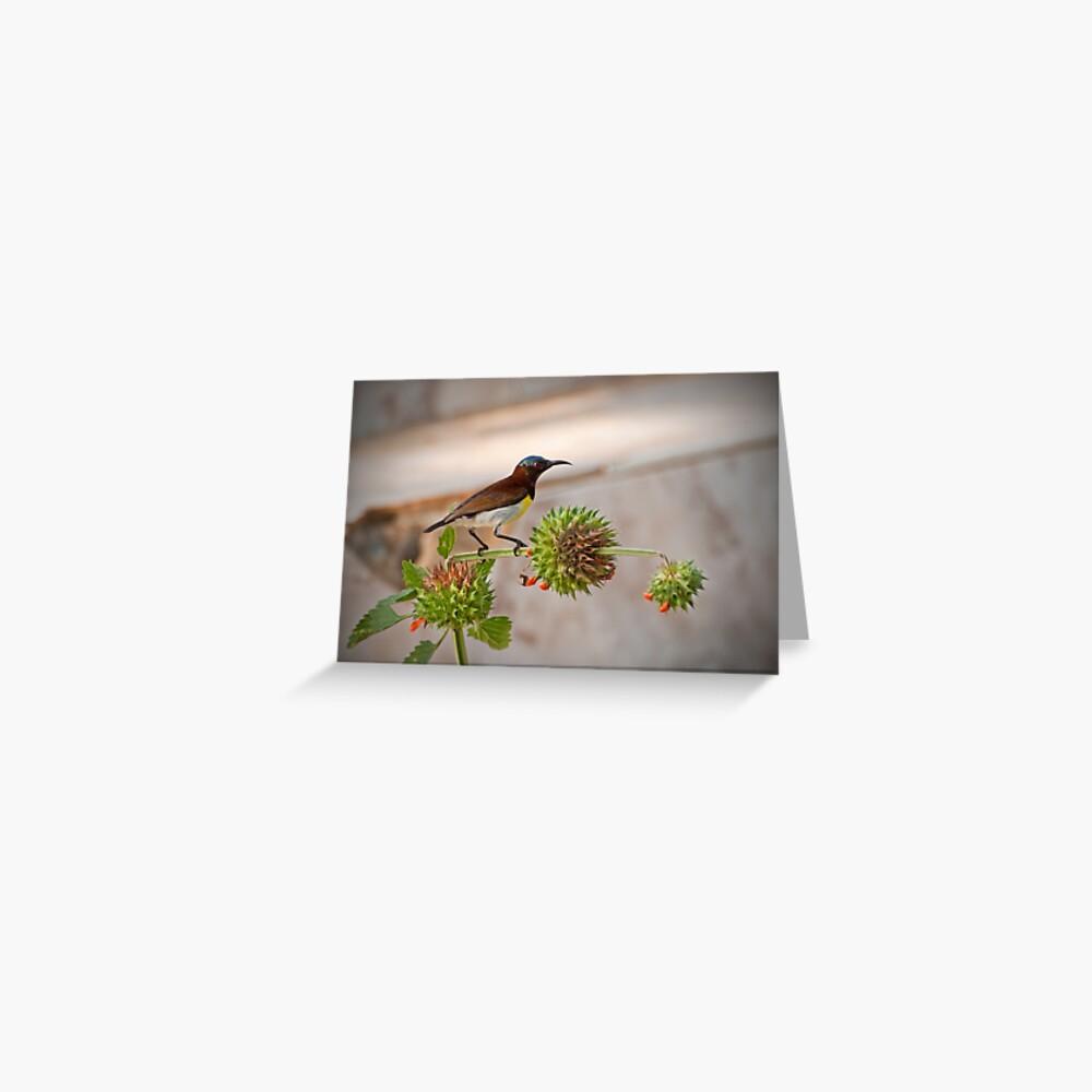 Purple-rumped Sunbird Greeting Card