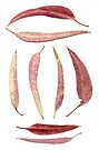 pink gum leaves scanogram by Janine Paris