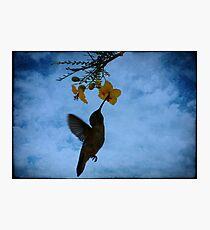 Humming Bird. Photographic Print