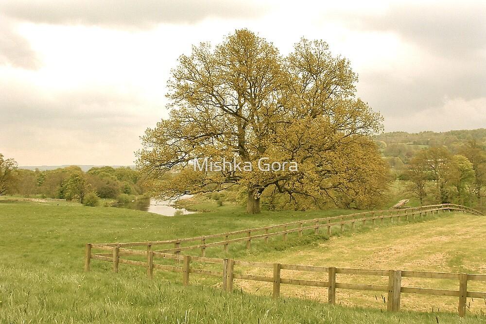 Northumberland by Mishka Gora