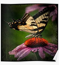 TTV-Water Color Beautiful Butterfly. Poster