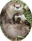 An otter moment by Anthony Brewer
