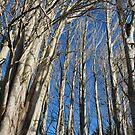 Tree Line by Randall Robinson