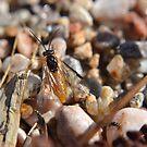Bright bug on the beach by Kate Farkas