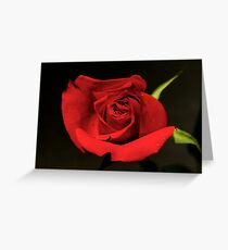 Kardinal rose Greeting Card