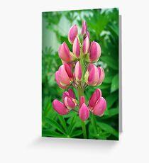 Pink Lupin Greeting Card