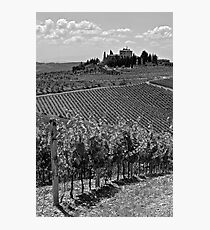 Tuscan Vineyards Photographic Print