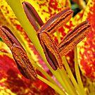 Lavish Lily by Monnie Ryan