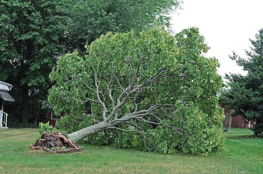 Uprooted by Paul Gitto