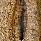 Cambodia Yoni Tree by David  Perea
