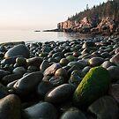 Sea Egg – Acadia National Park, Maine by Jason Heritage